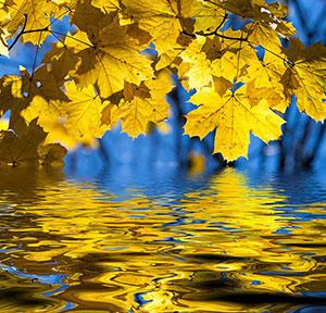 Желтые изображения - 24304