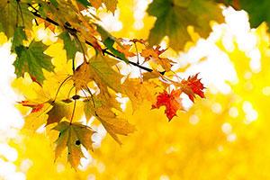 Желтые изображения - 24333