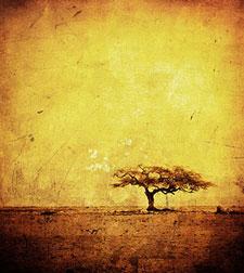 Желтые изображения - 23708