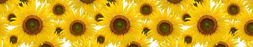 Скинали - Желтые подсолнухи