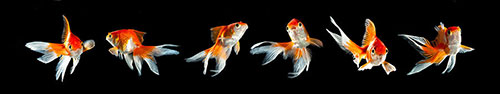 Скинали - Рыбки для аквариума