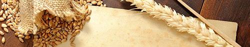 Скинали - Зерна пшеницы