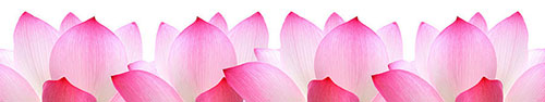 Скинали - Розовые лепестки
