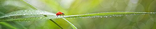 Скинали - Божья коровка за листике
