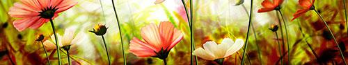Скинали - Красивое насыщенное цветочное настроение