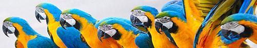 Скинали - Пестрые попугайчики