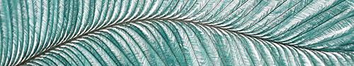 Скинали - Папоротниковидное растение