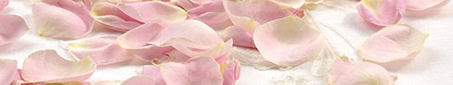 Скинали - Лепестки розовых роз
