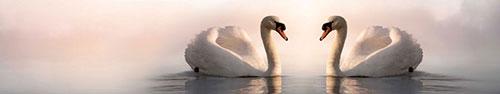 Скинали - Два прекрасных лебедя