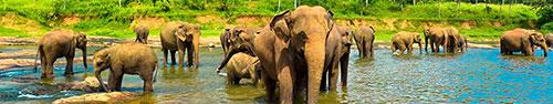 Скинали - Слоны в саване
