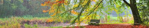 Скинали - Осень в лесу