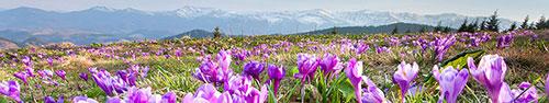 Скинали - Горный пейзаж на фоне фиолетовых луговых цветов