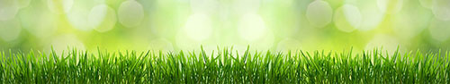 Скинали - Свежая трава на пастельном салатовом фоне