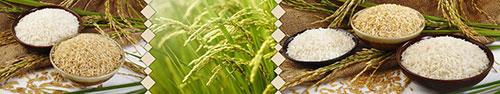 Скинали - Белый, японский и коричневый виды риса на фоне мешка и растение риса