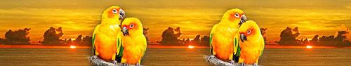 Скинали - Попугаи на фоне заката солнца в Таиланде