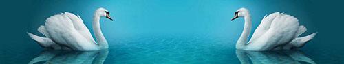 Скинали - Белые лебеди на воде