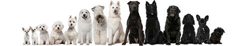 Скинали - Ряд черных и белых собак на белом фоне