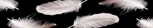 Скинали - Перья на черном фоне