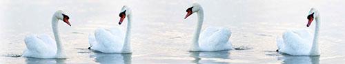 Скинали - Лебеди на воде