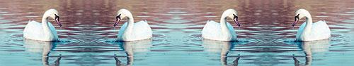 Скинали - Лебеди на озере на закате