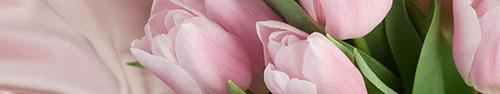 Скинали - Бледно розовые тюльпаны