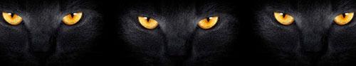 Скинали - Кошачьи глаза в темноте