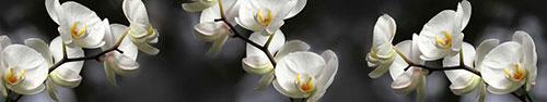Скинали - Ветка белой орхидеи на темном фоне