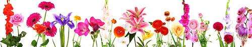 Скинали - Различные цветы на белом фоне