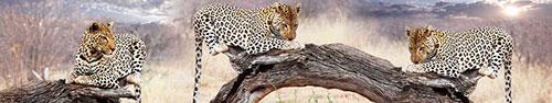Скинали - Леопарды отдыхают