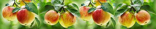 Скинали - Спелые яблоки на деревьях
