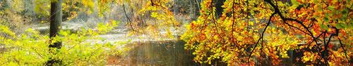 Скинали - Осенний пейзаж