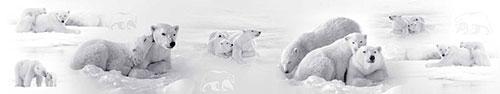 Скинали - Белые медведи отдыхают