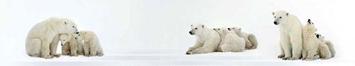 Скинали - Белые медвежата с мамой
