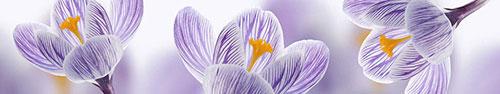 Скинали - Нежные бело-фиолетовые крокусы