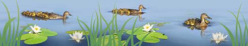 Скинали - Утки на озере в ясный день