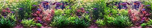 Скинали - Аквариум с множеством ярких рыбок