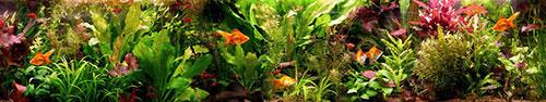 Скинали - Аквариум с золотыми и другими рыбками