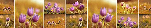 Скинали - Цветы сон-трава в солнечном свете
