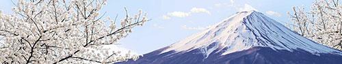 Скинали - Величественная Фудзияма на фоне цветущего дерева
