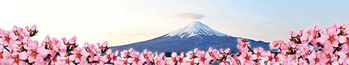 Скинали - Фудзияма в цветущих ветках миндаля