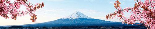 Скинали - Цветение сакуры на фоне Фудзиямы