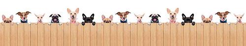 Скинали - Веселые облизывающиеся собачки за деревянным ограждением