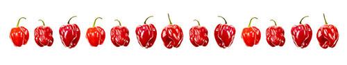 Скинали - Свежие красные перцы на белом фоне