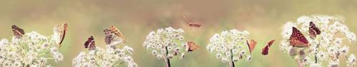Скинали - Бабочки на белых цветках в поле