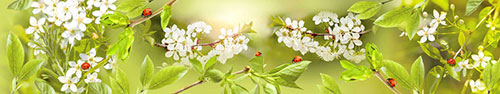 Скинали - Божьи коровки на ветках цветущих деревьев и разных листиках