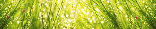Скинали - Божьи коровки на свежей утренней росе весенней травки
