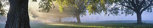 Скинали - Солнечные лучи в саду Швеции