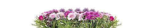 Скинали - Розово-фиолетовые цветы