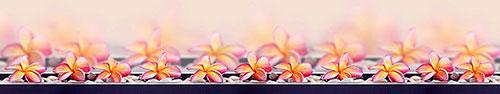 Скинали - Ряд ярких цветов франжипани с камушками