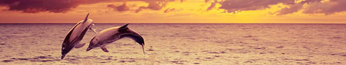 Скинали - Пара дельфинов, романтичный закат, изображение с эффектом рисунка маслом